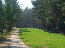 Foot-path. In the forest stock photos