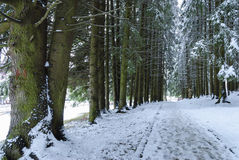 Foot path through the fir trees. Forest in winter time, in mountain resort Poiana Brasov, Romania stock photos