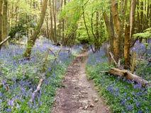 Foot path Stock Image