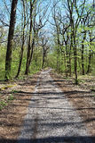Foot-path in fresh spring deciduous forest Royalty Free Stock Photo