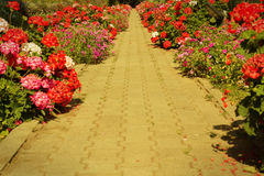 Foot path in garden,vintage filtered Royalty Free Stock Images