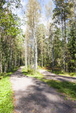 Foot path in green summer forest Royalty Free Stock Images