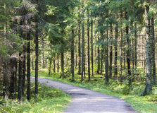 Foot path in green summer forest Stock Photo