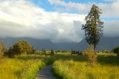 Foot path at Lake Matheson - Glaciers Country Royalty Free Stock Image