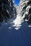 Foot-path near Travny hill in Moravskoslezske Beskydy Stock Images