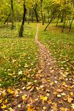 Foot path in park. With leaves stock photos