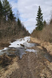 Foot path with snow in early spring forest Royalty Free Stock Photos