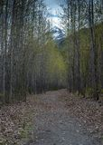 Foot Path into the Springtime Mountains. Peaceful foot path leading through a tree lined corridor to the Rocky Mountains in the spring royalty free stock images