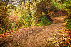 Foot path in theForest in Nepal Royalty Free Stock Images