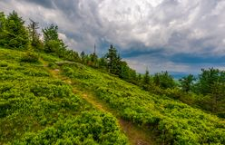 Foot path uphill in to the forest. Lovely summer scenery. hiking and outdoor activities concept. dark cloudy sky Stock Image