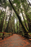 Foot path walkway in forest Royalty Free Stock Photo