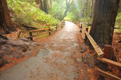 Foot path walkway in forest. Wooden fence along a forest walkway Stock Images