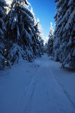 Foot-path in winter forest Royalty Free Stock Photography
