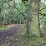 Foot Path through the woods. At Hilton Gravel Pits wild life reserve Hilton Derbyshire Stock Photography