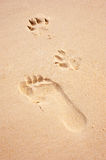 Foot and paw prints on beach Stock Image