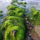 Foot, pebble, seaweed, art, seaside Stock Image