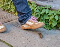 Foot of a pedestrian who is about to step on a dog poop Royalty Free Stock Image