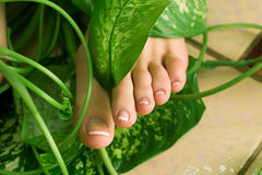 Foot with pedicure Stock Image