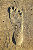 Foot print Stock Photography