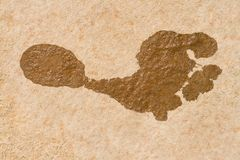 Foot Print. Wet Foot Print on the Stone Royalty Free Stock Image