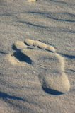 Foot print. In the sand Stock Images