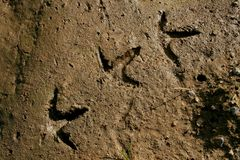 The foot print. Old foot prints in clay Royalty Free Stock Photos