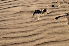 Foot print. In sand Royalty Free Stock Images