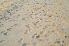 Foot print. On the beach Stock Photography