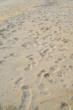 Foot print. On the beach Royalty Free Stock Photo