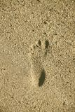 Foot print on the beach sand. On sunrise royalty free stock images