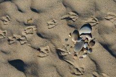 Foot print of gull Stock Photos