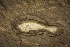 Foot print. On muddy ground Royalty Free Stock Photos
