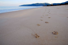 Foot print ont hte beach. Foot print on the beach Royalty Free Stock Photo