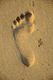 Foot print on sand, Royalty Free Stock Images