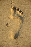 Foot print on sand, Stock Images