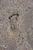 Foot print on the sand Stock Photography