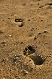 Foot Prints. On the beach Royalty Free Stock Images