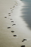 Foot prints Royalty Free Stock Photo