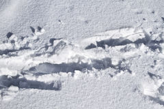 Foot prints. On the fresh snow on the winter day stock photo