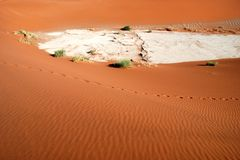 Foot prints. Through the namib desert near Sossusvlei- Namibia Royalty Free Stock Images