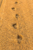 Foot prints. In the beach Stock Photos
