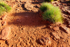 Foot prints on dry orange and ground in Australian outback Stock Photography