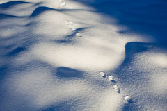 Foot prints in the fresh snow Stock Photography
