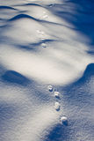 Foot prints in the fresh snow Royalty Free Stock Image
