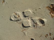 Foot prints going the opposite way Royalty Free Stock Photo