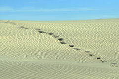 Foot prints going over a sand dune. Stock Photo