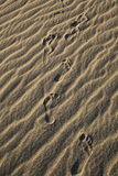 Foot prints of human on a beach. Stock Images