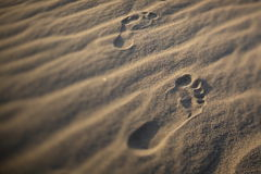 Foot prints of human on a sand dune. Stock Photos