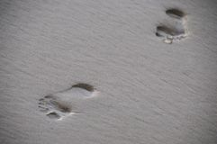 Foot prints in the sand Stock Image