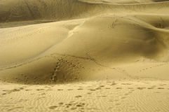 Foot prints in sand. Many foot prints in sand dunes Royalty Free Stock Image